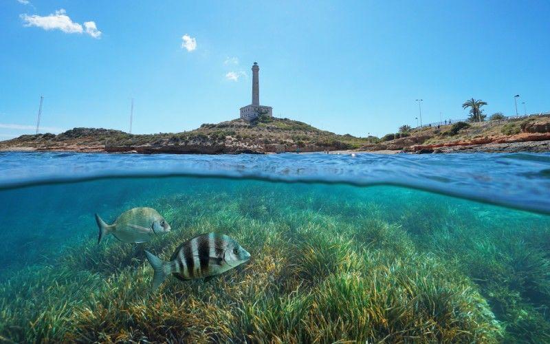 Deux poissons sous la mer à Cabo de Palos