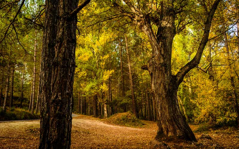 espacios naturales de Albacete