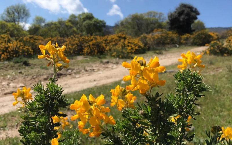 Forêt de cambroño dans l'environnement de Los Molinos