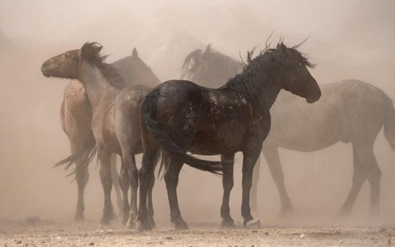 Chevaux sauvages dans le désert de l'Utah