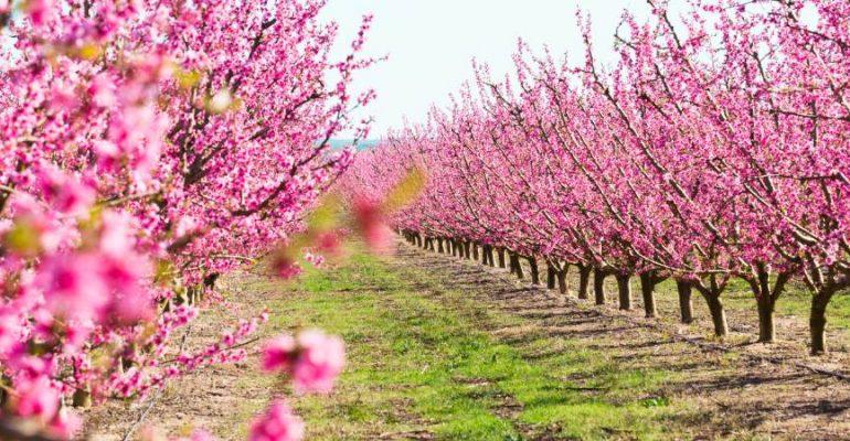 7 endroits pour profiter du printemps en Espagne