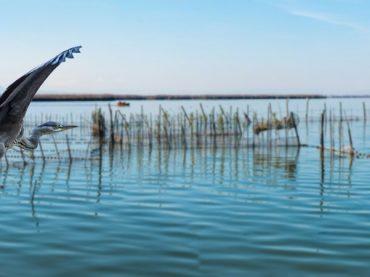 Le Parc naturel de l'Albufera, le grand oasis de Valence et berceau de la paella