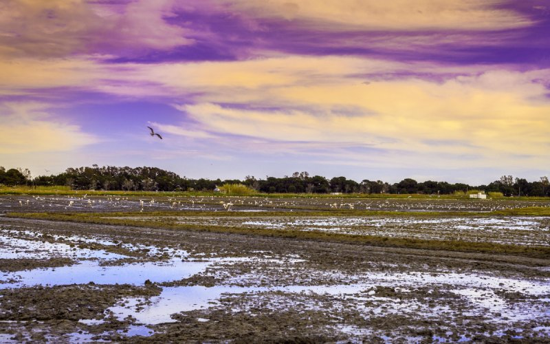 Les rizières de l'Albufera