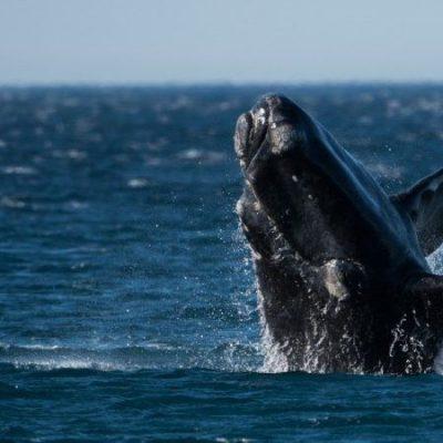 Les baleiniers basques ou la première activité industrielle en Amérique du Nord