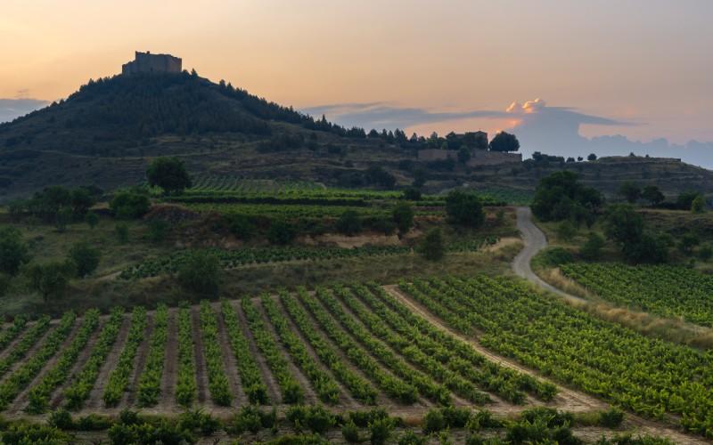 Le vignoble de la Rioja au pied du château Davalillo