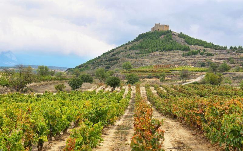 Le château de Davalillo au milieu des vignes