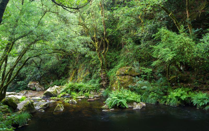 Image de la forêt entourant les chutes d'eau de Toxa