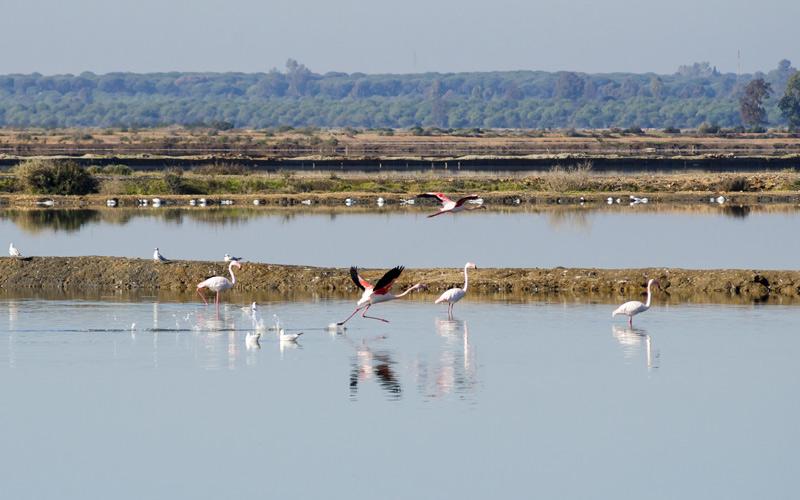 Oiseaux migratoires dans les Marais d'Odiel