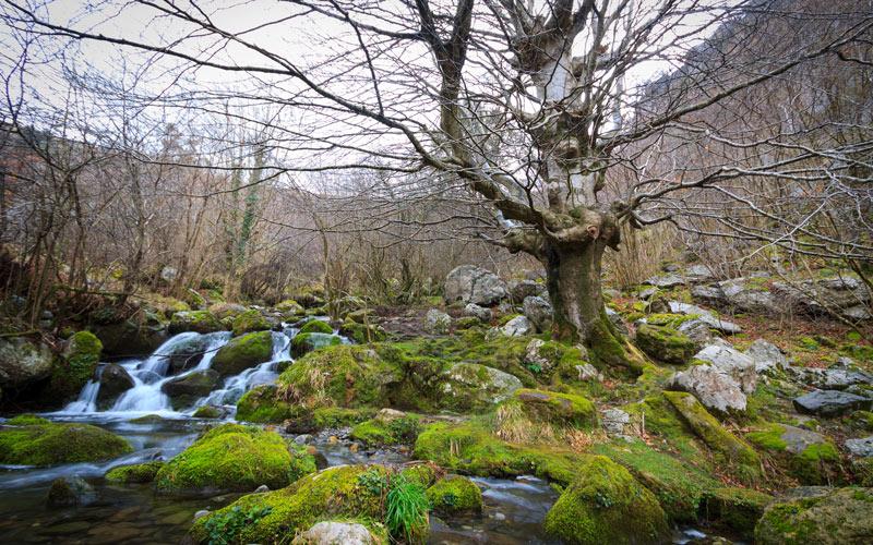 Forêt à côté de la cascade de la rivière Asón
