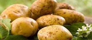 patata villanane