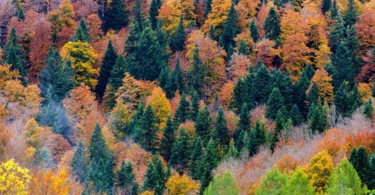 La Navarre, une belle destination en automne