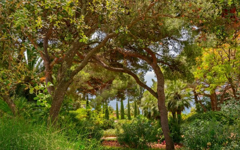 La végétation du jardin botanique de Marimurtra est très variée