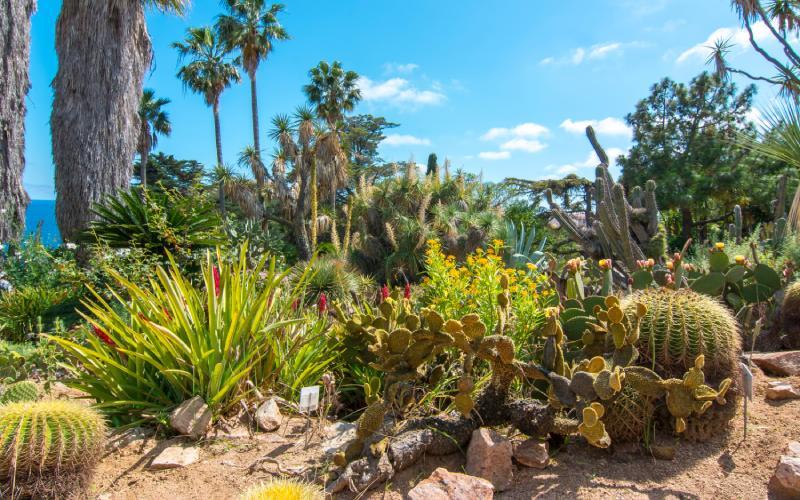 Les espèces du jardin s'étendent sur les cinq continents