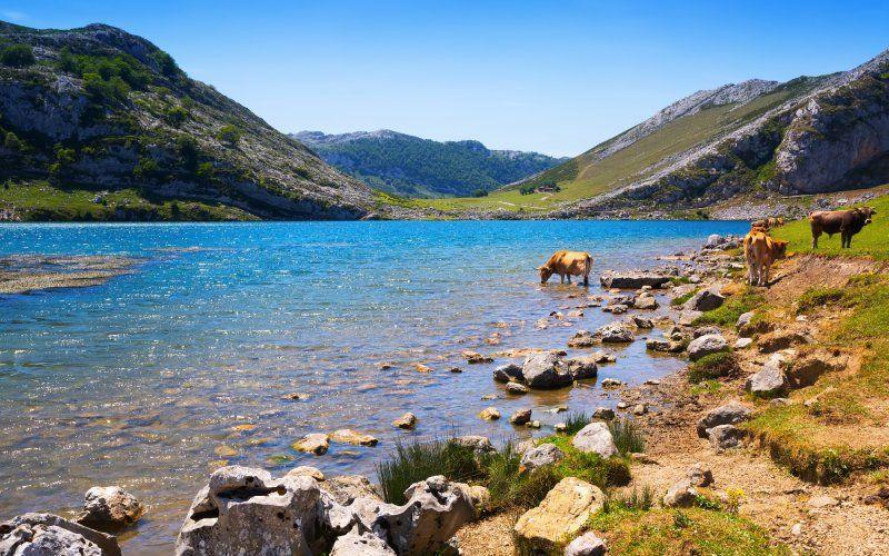 Les lacs de Covadonga, nature et culture