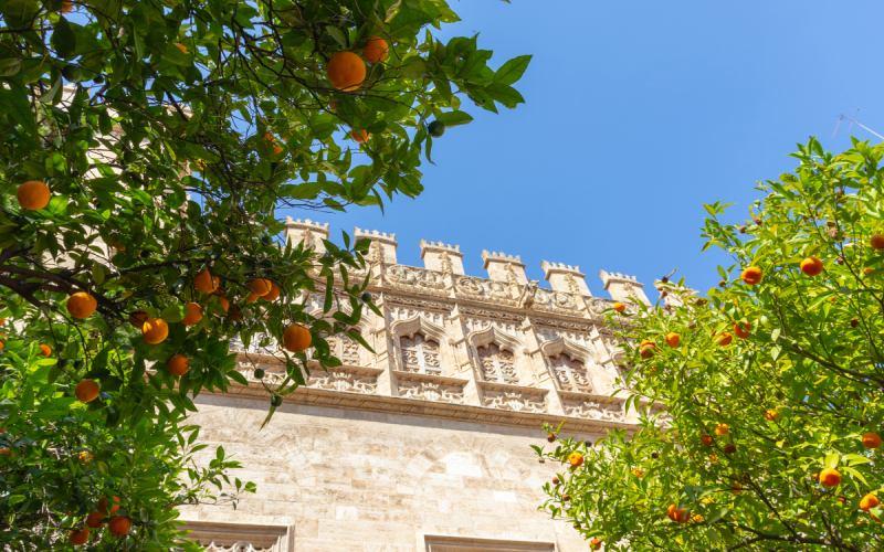 Les Orangers de la Bourse de la Soie de Valence
