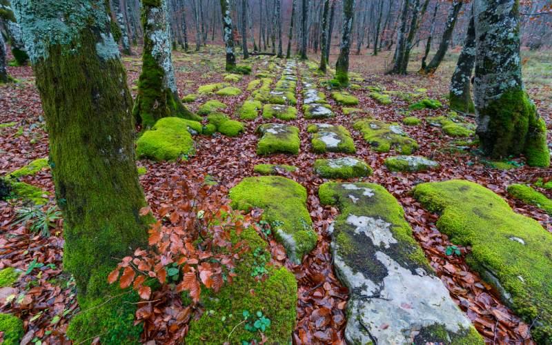 Les sentiers du Mont Santiago en automne