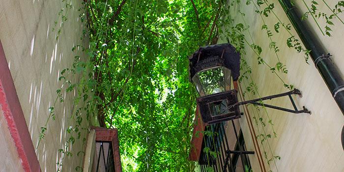 Rue Verde