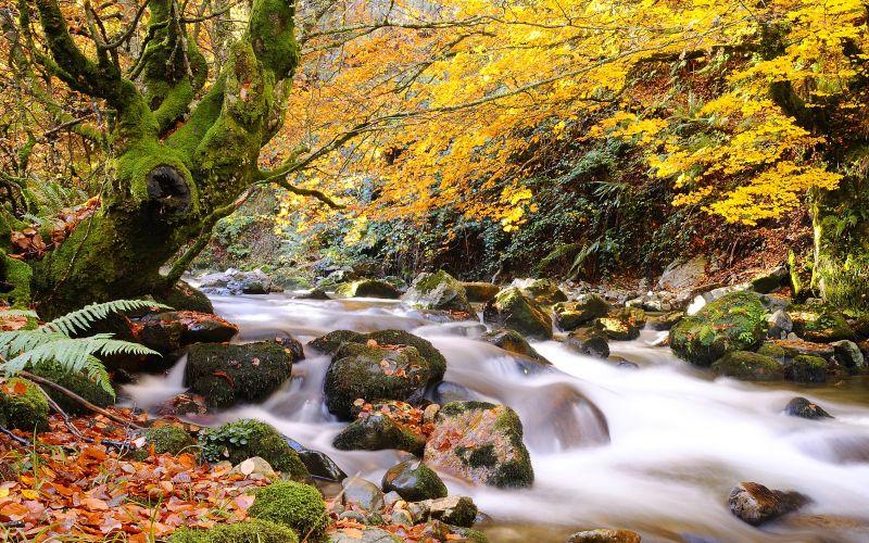 Le cours de la rivière Nalón dans un paysage d'automne dans le parc naturel de Redes
