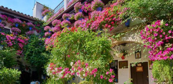 Les patios de Cordoue : un mode de vie devenu fête populaire