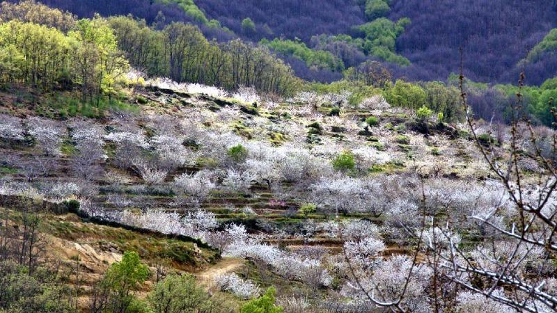 Valle du Jerte en automne.
